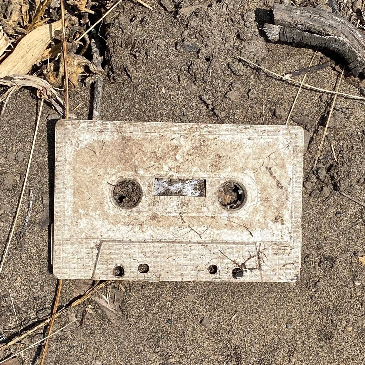I found a very rare fossil on my walk today.