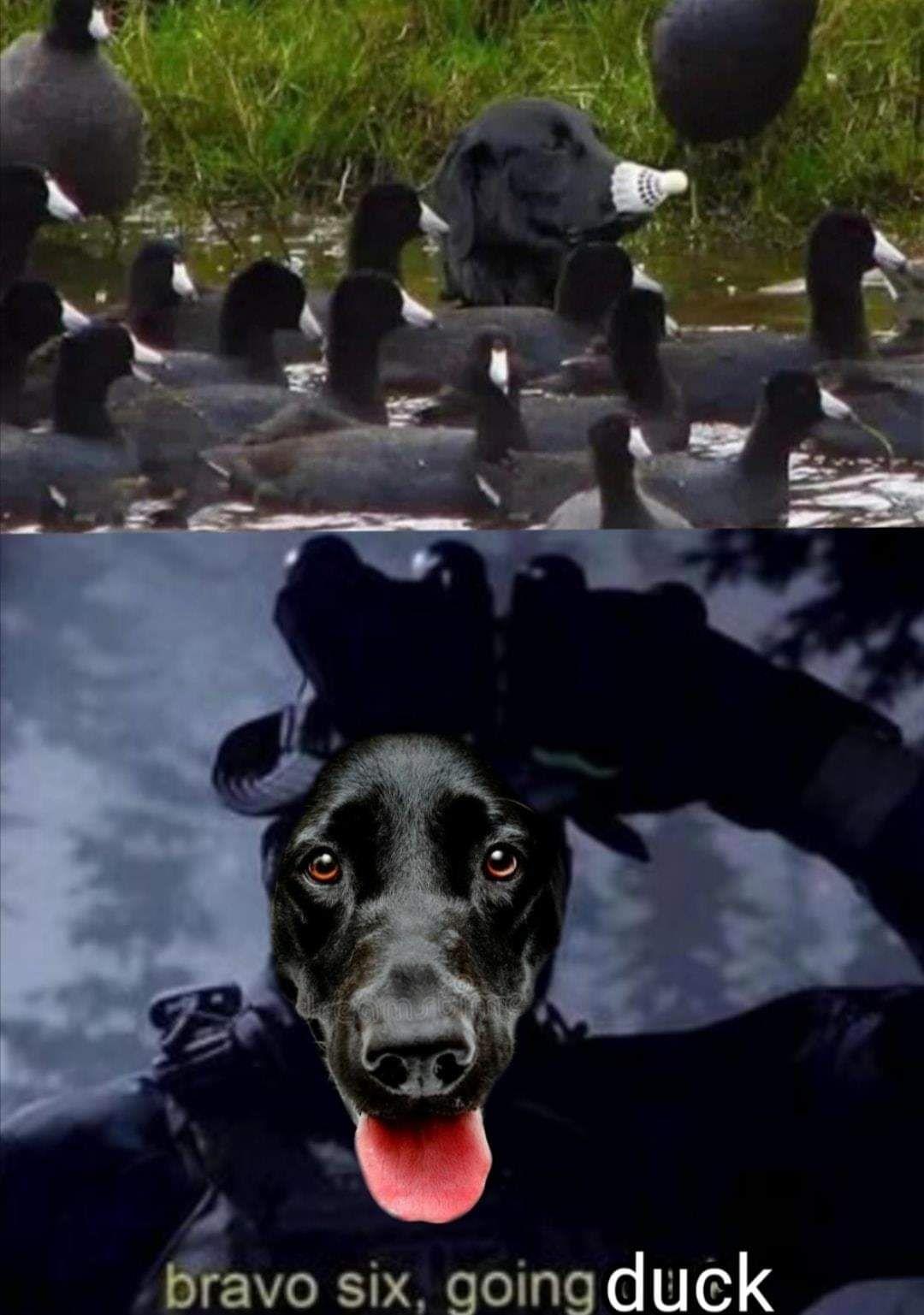 Going duck