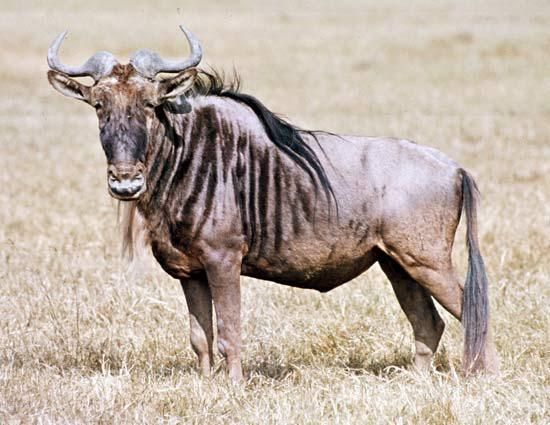 For everyone sorting by gnu