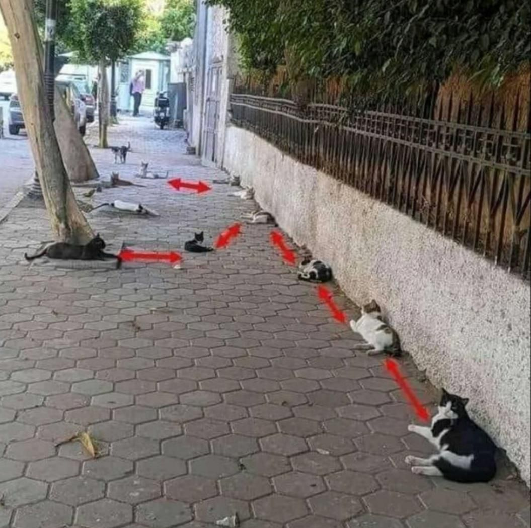 Even these cats are taking social distancing seriously