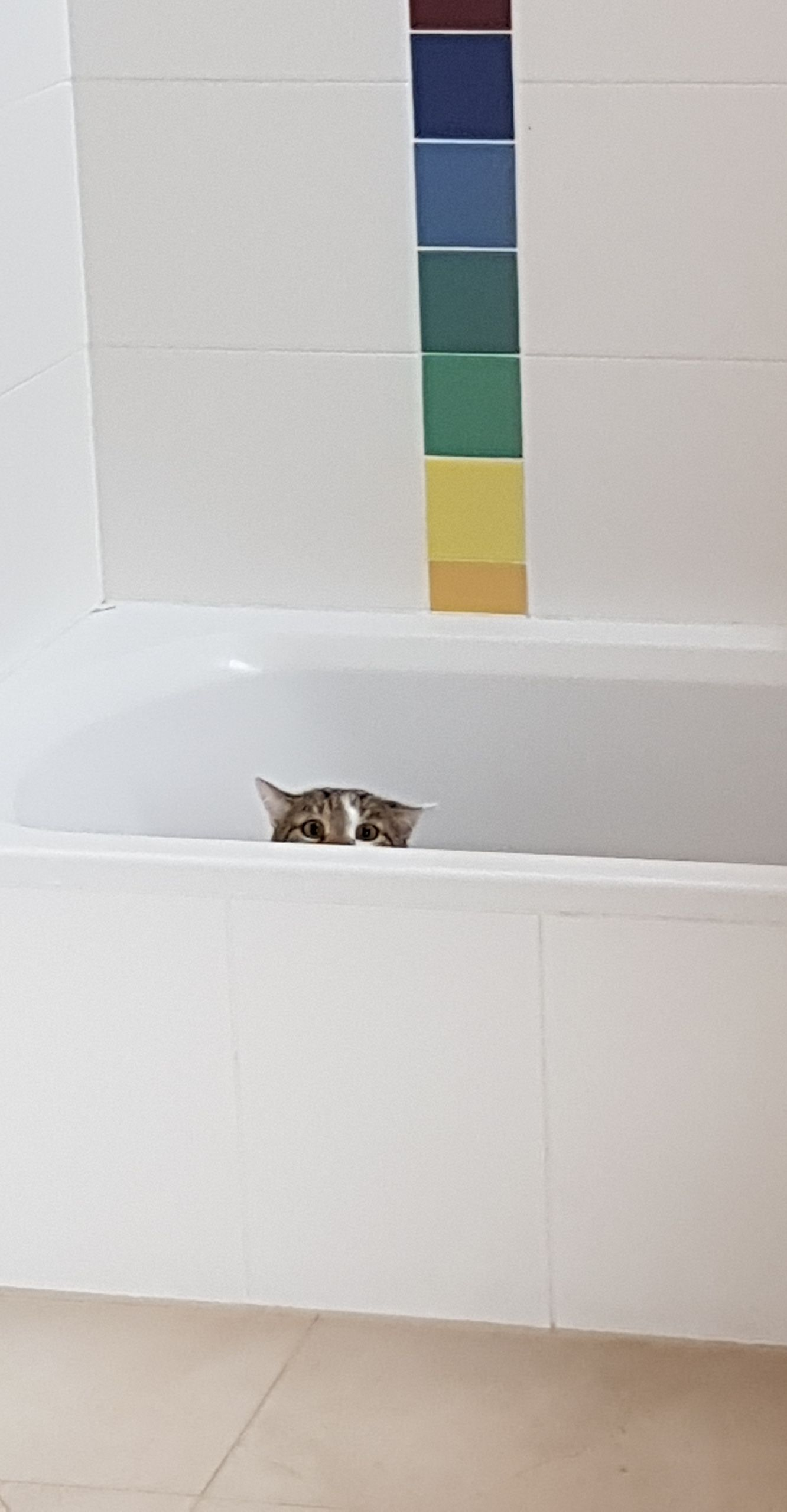 My cat got super scared by our visitors and hid in the bathtub