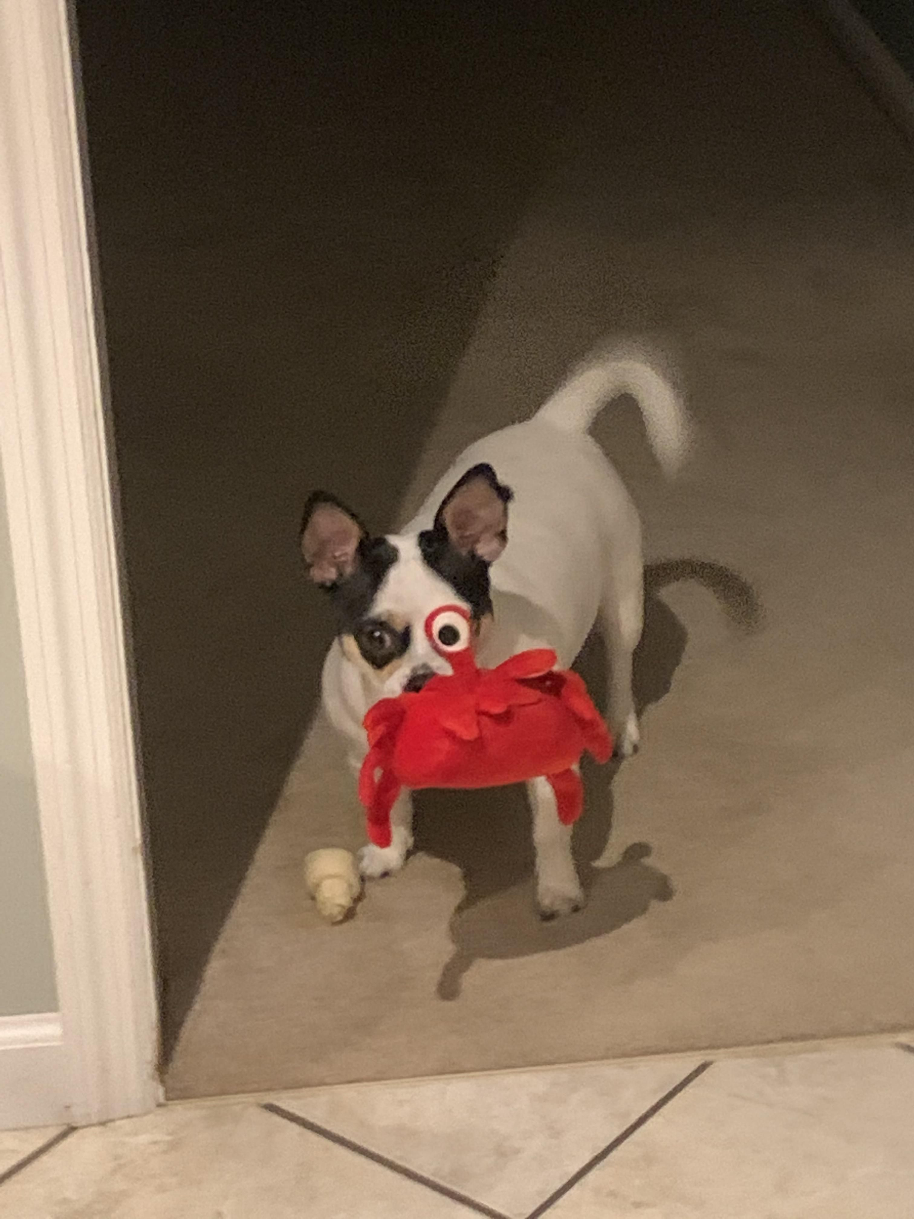 My dog picked up his toy just right