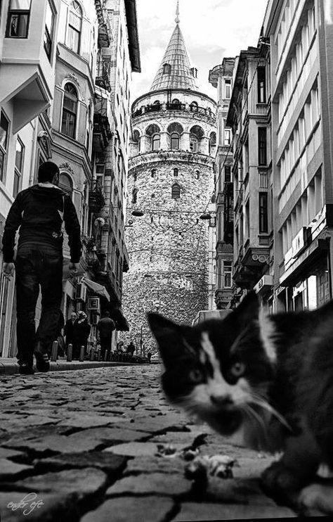 Cat photobomb in Istanbul