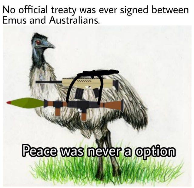 *angry emu noises*
