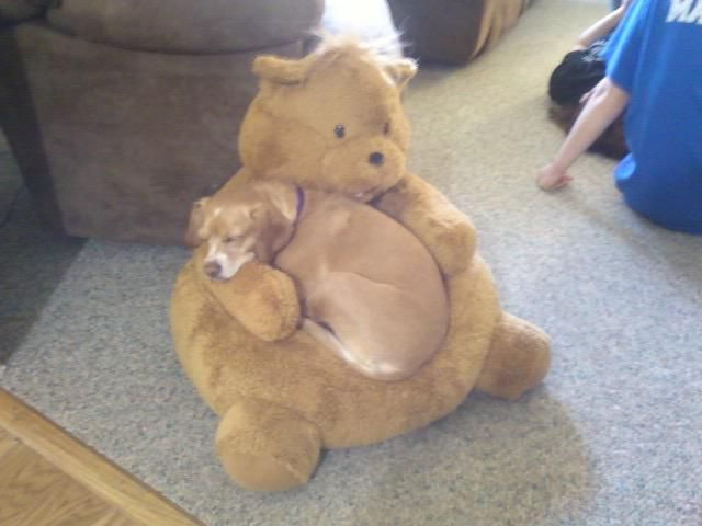 This dog looks like the most comfortable thing on earth