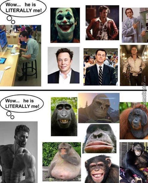Monkey=Chad