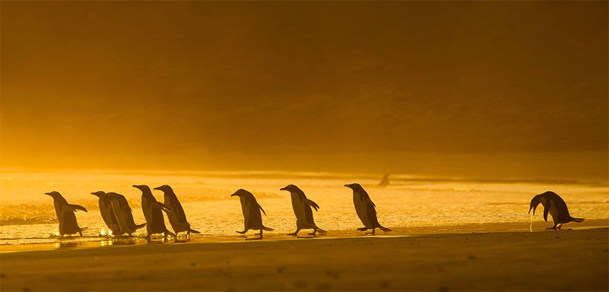Finalist of the 2020 Comedy Wildlife Photograph Awards. Name of photographer unknown.