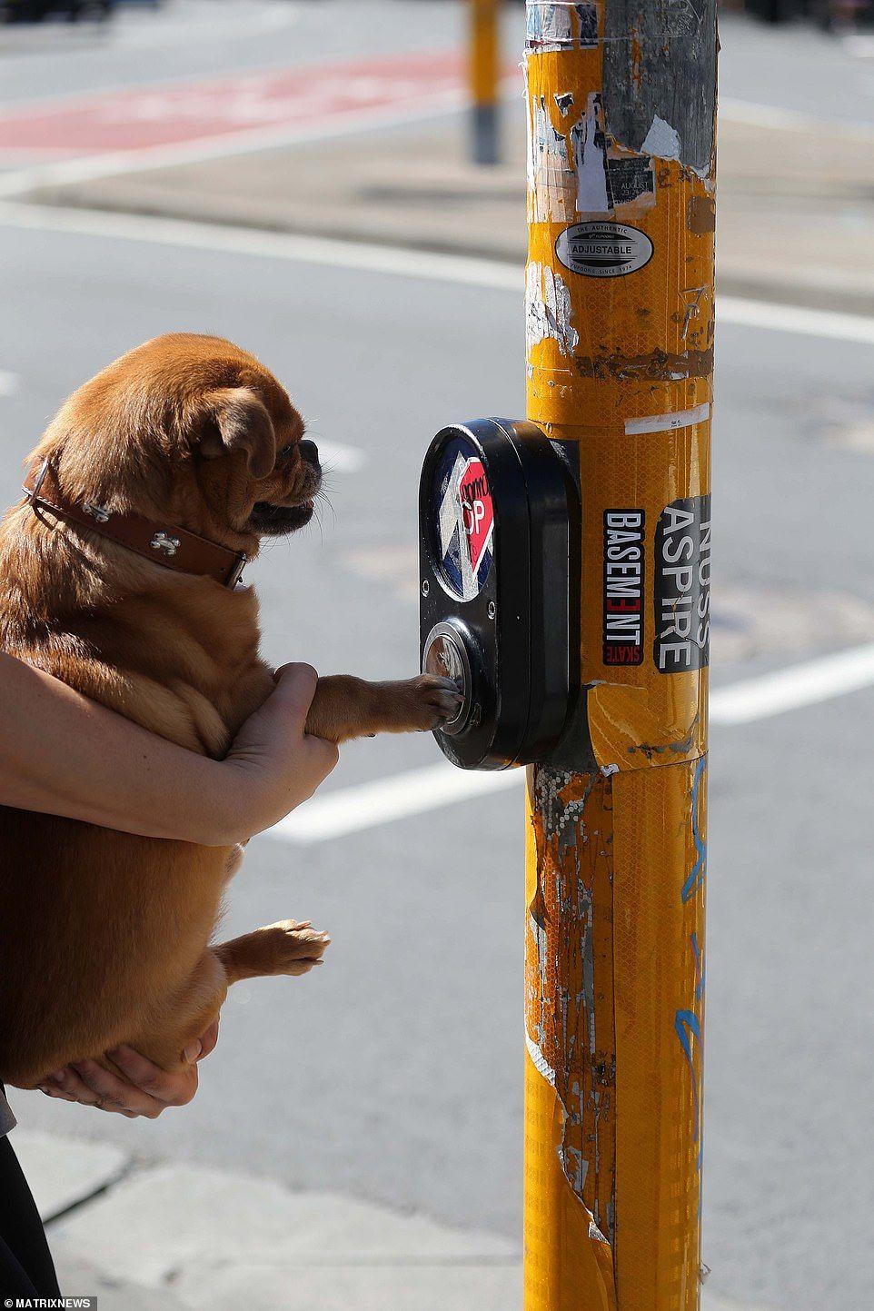 How to avoid covid at crosswalks