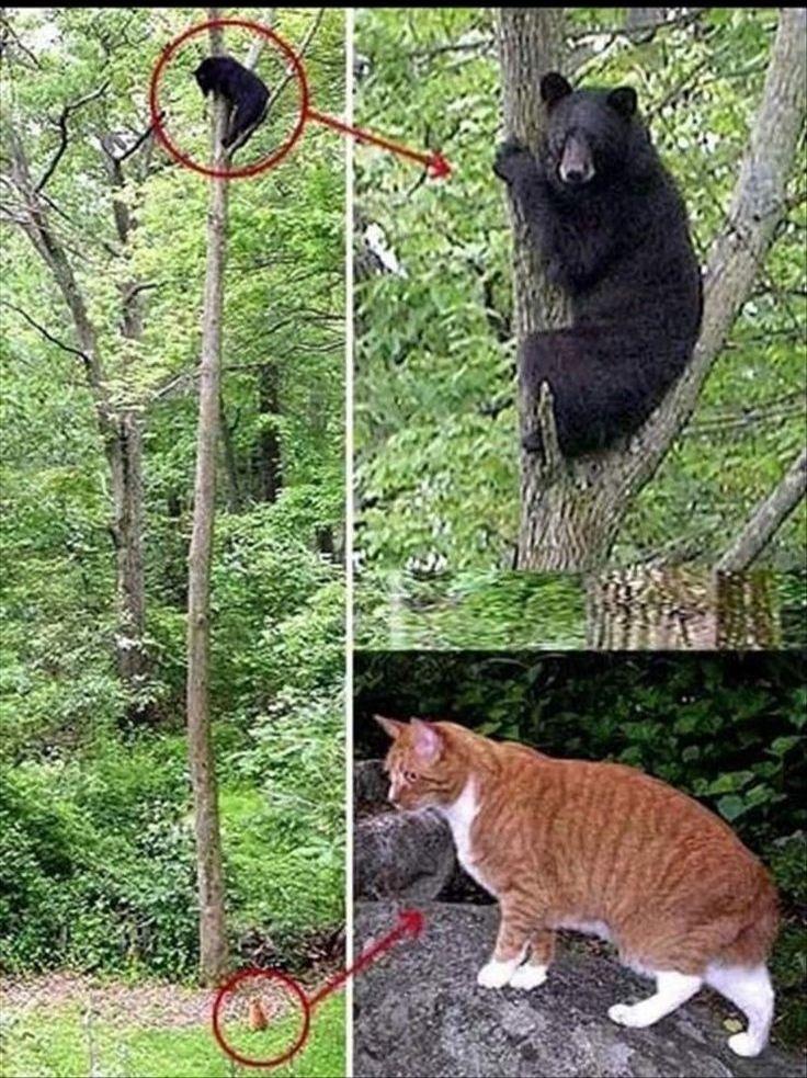 Poor Bear gets bullied by a grumpy cat