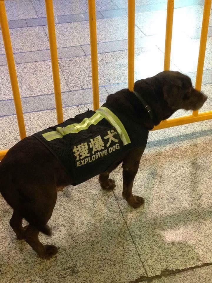 Dogs are dangerous in Japan
