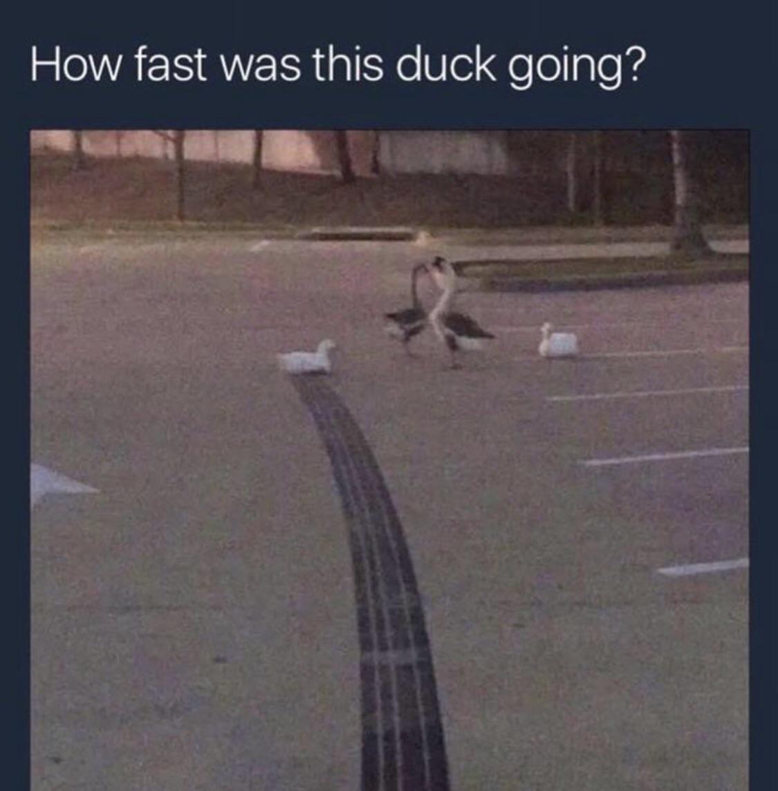 Duck goes brrrrr
