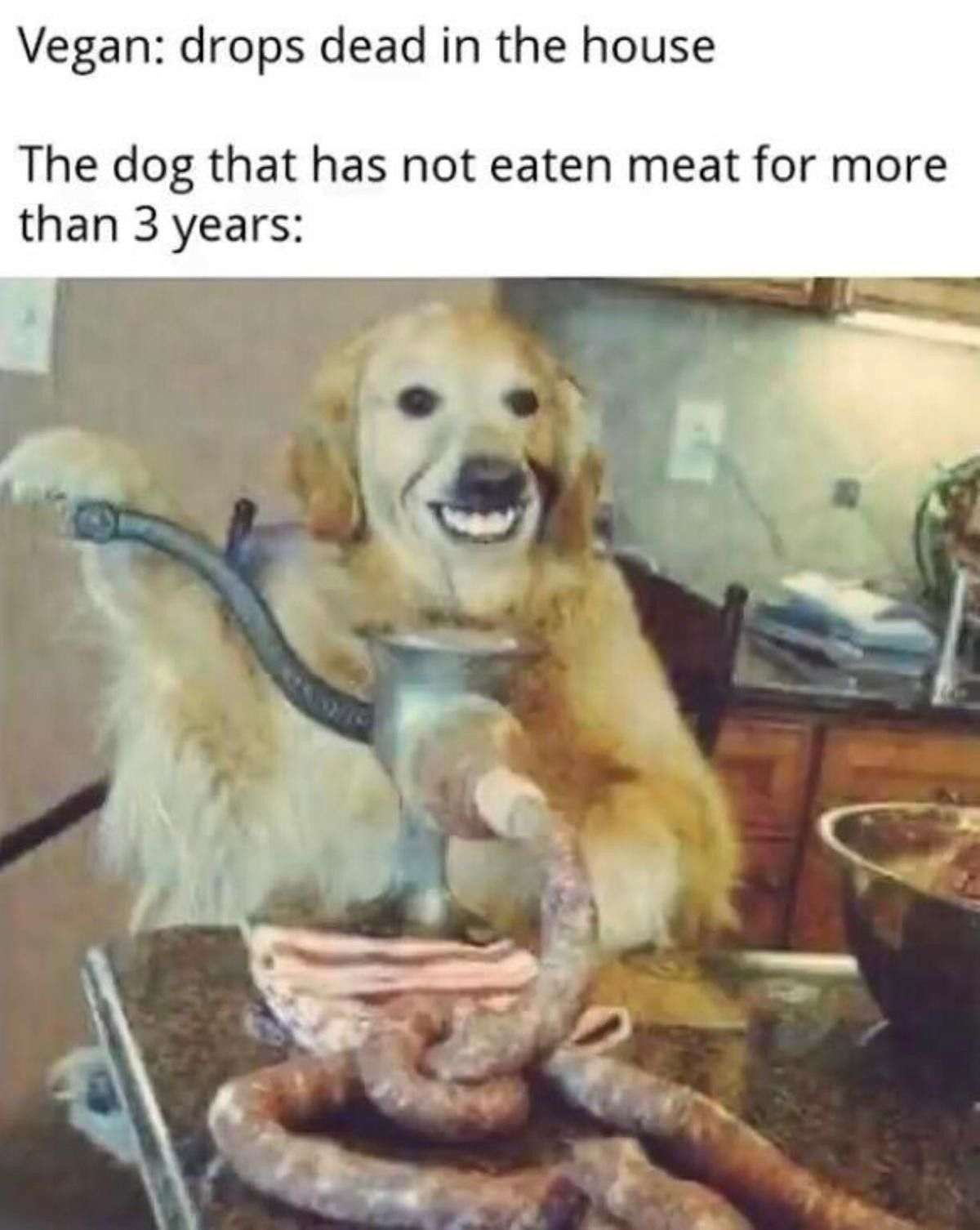 Only the best grass-fed meat for man's best friend