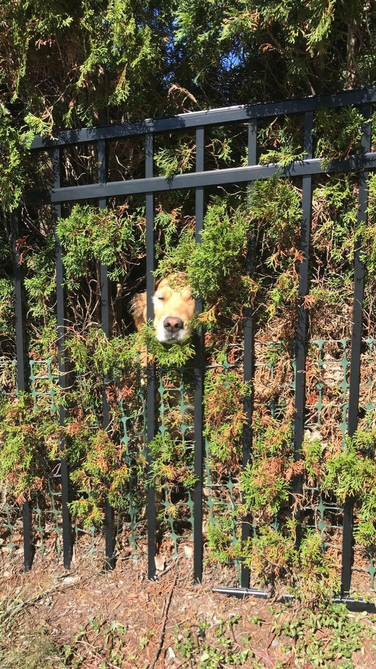 The bush doggo has been summoned!