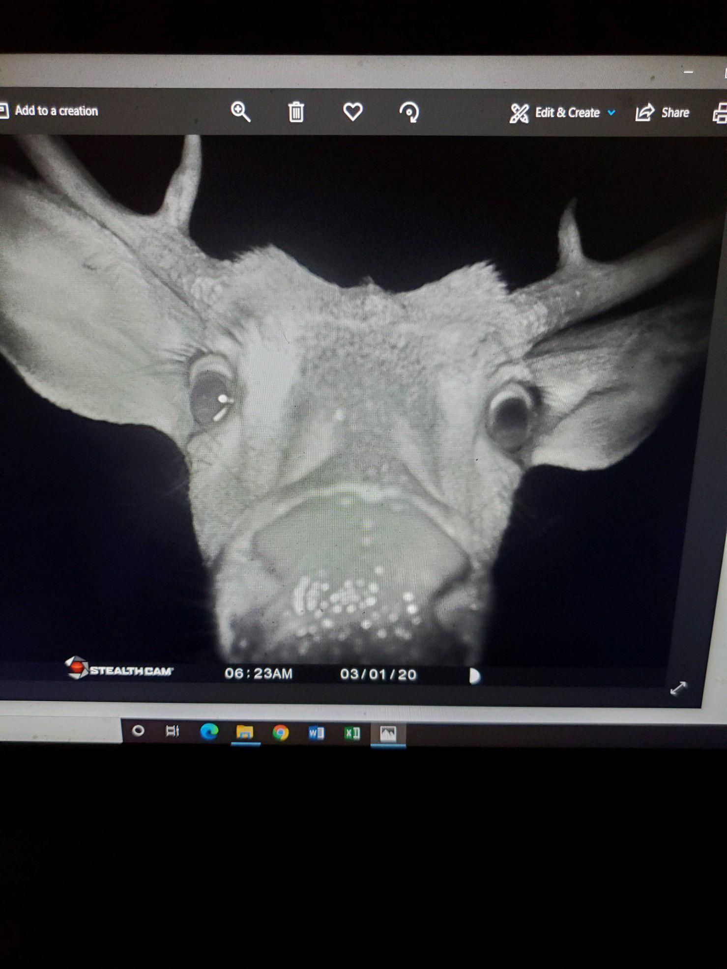 My dad got this picture on his trail camera