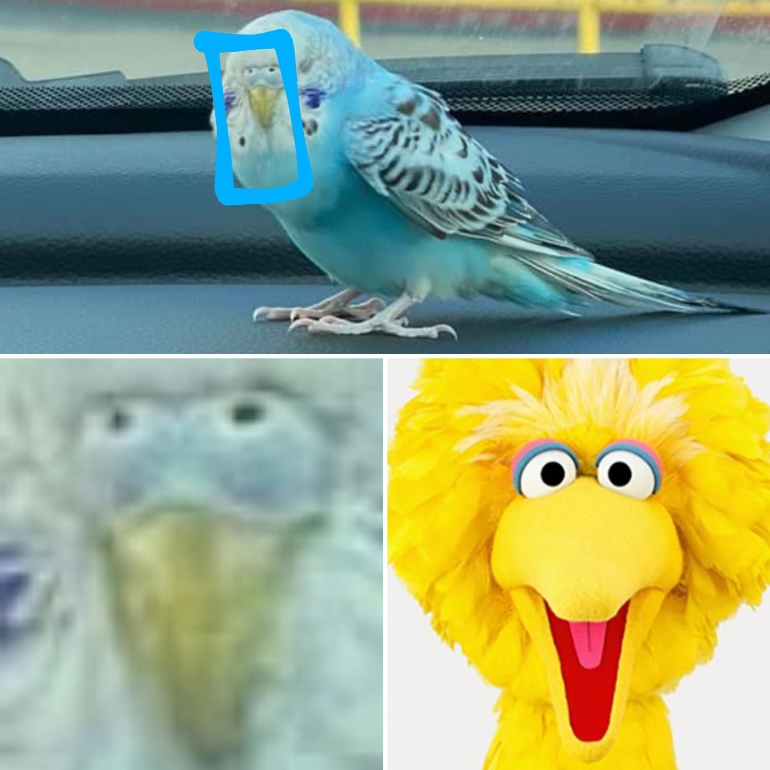 I have discovered the origin of Big Bird