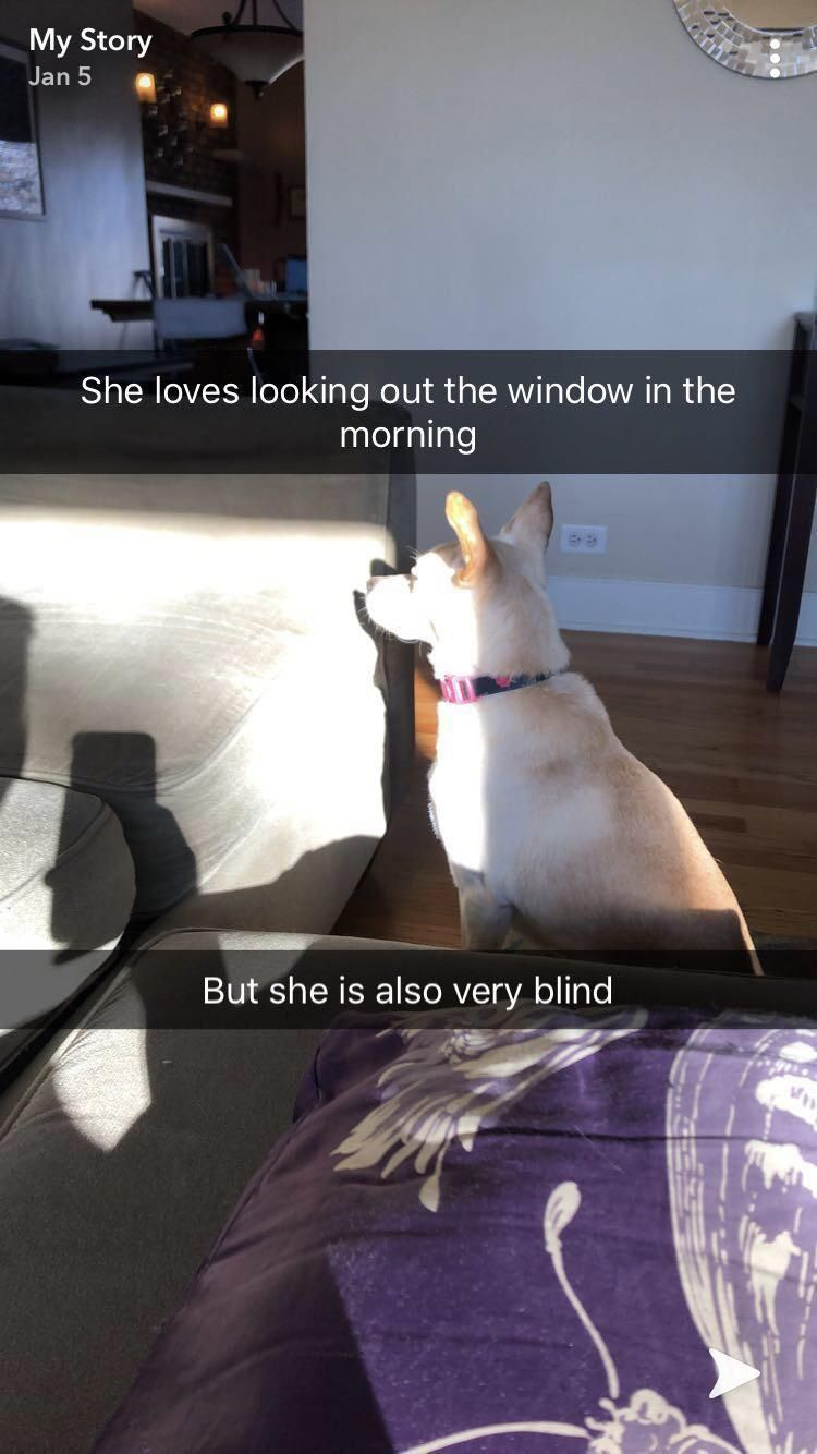 My old lady dog