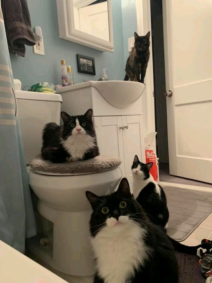 Can't take a shit in peace in this house