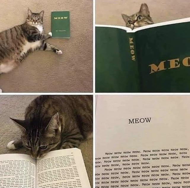 Meow meow meow meow?