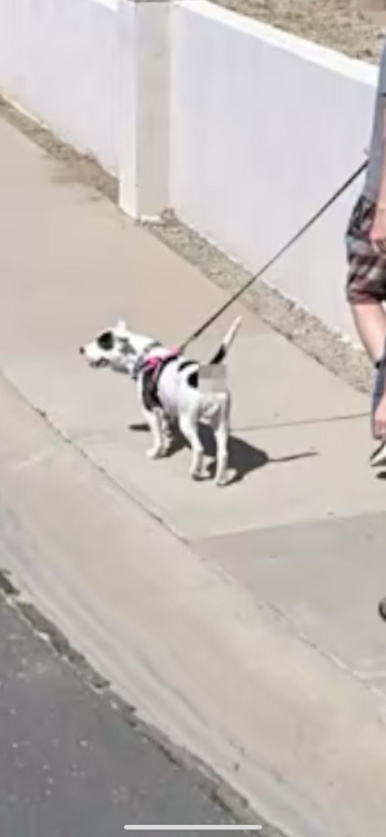 Made it onto Apple Map's new street view feature. They were kind enough to blur out my dog's butthole.