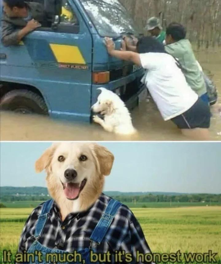 Cuz dogs