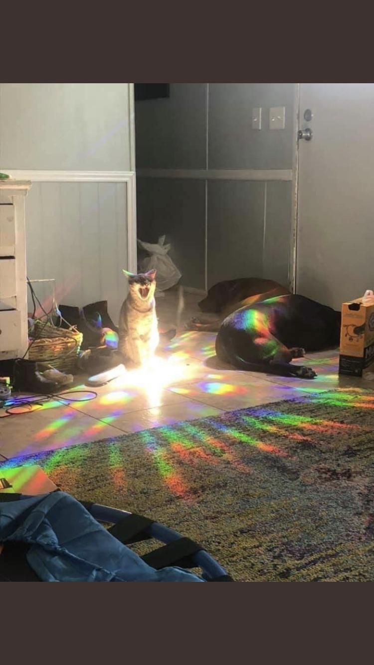 HE'S CHARGING UP FOR HIS SPECIAL ATTACK