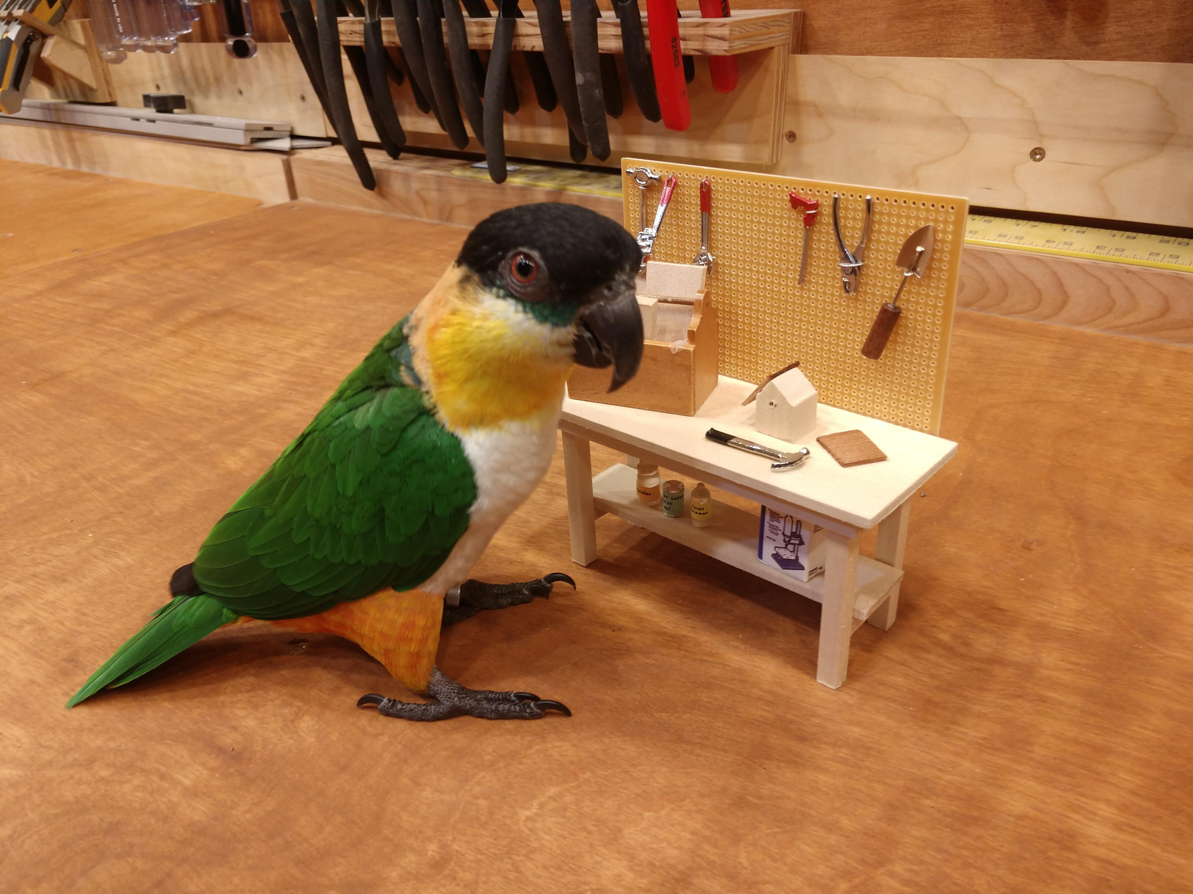 Parrot on a workbench with his workbench
