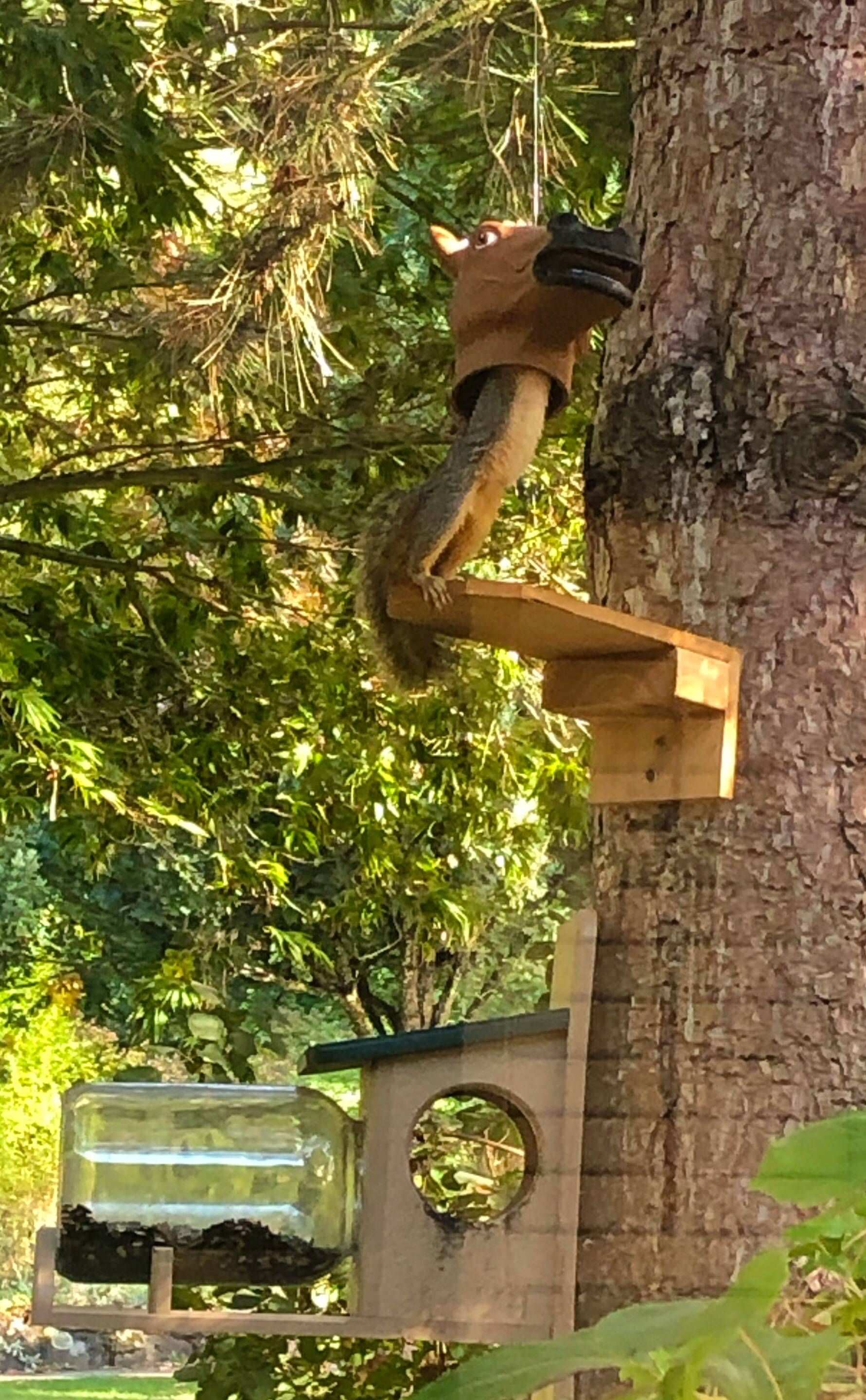 Got my wife a horse head squirrel feeder for her birthday and today one of them finally figured it out.
