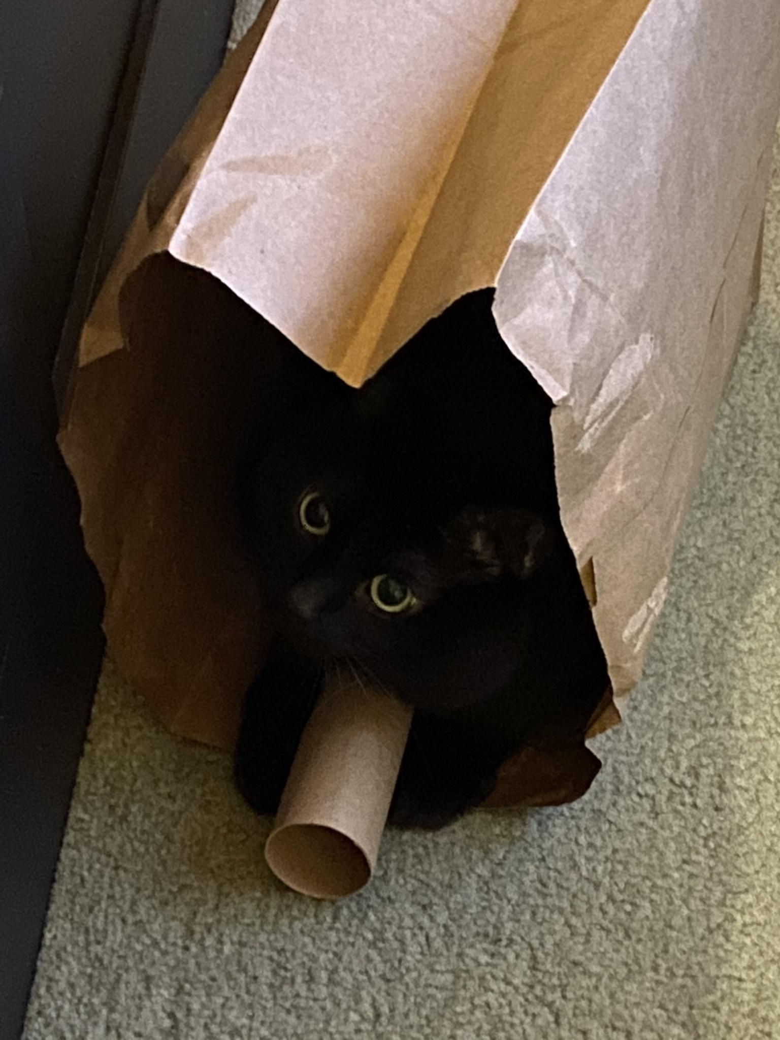 We buy him expensive toys and he plays with TP rolls and paper bags