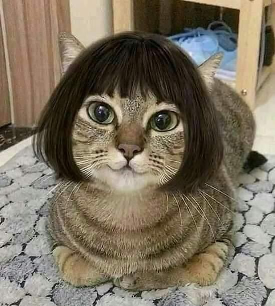 This is a Bob cat...