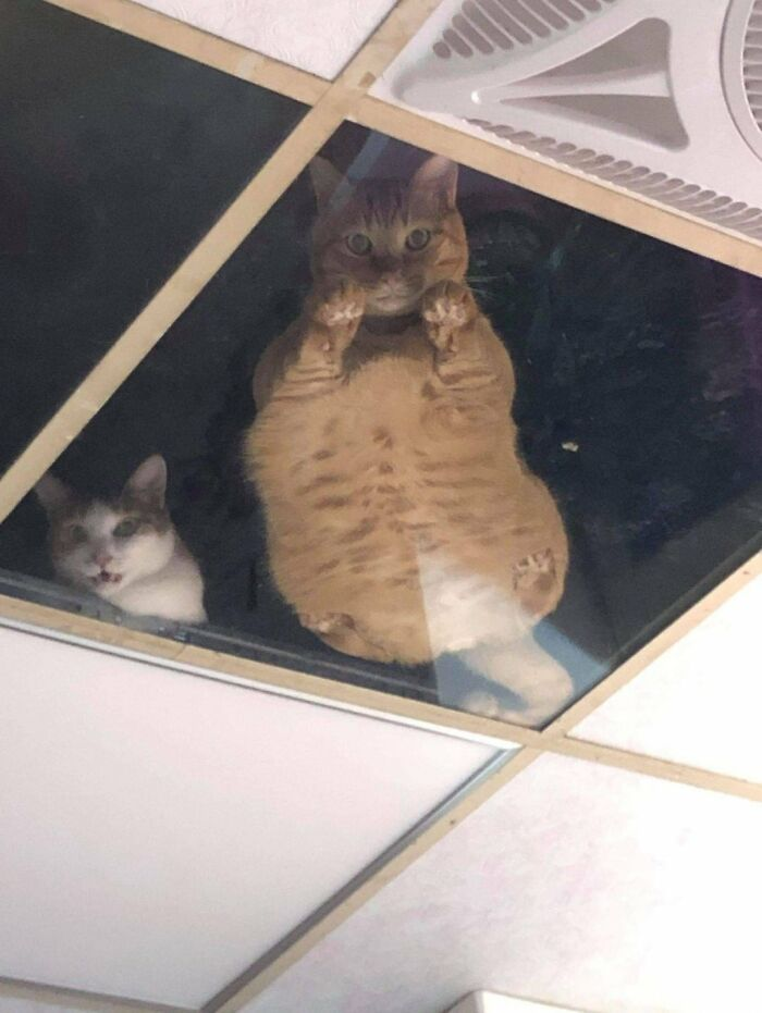 Shop Owner Installed A Glass Ceiling For His Cats And Now They Won't Stop Staring At Him