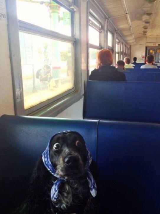 I've missed my stop!