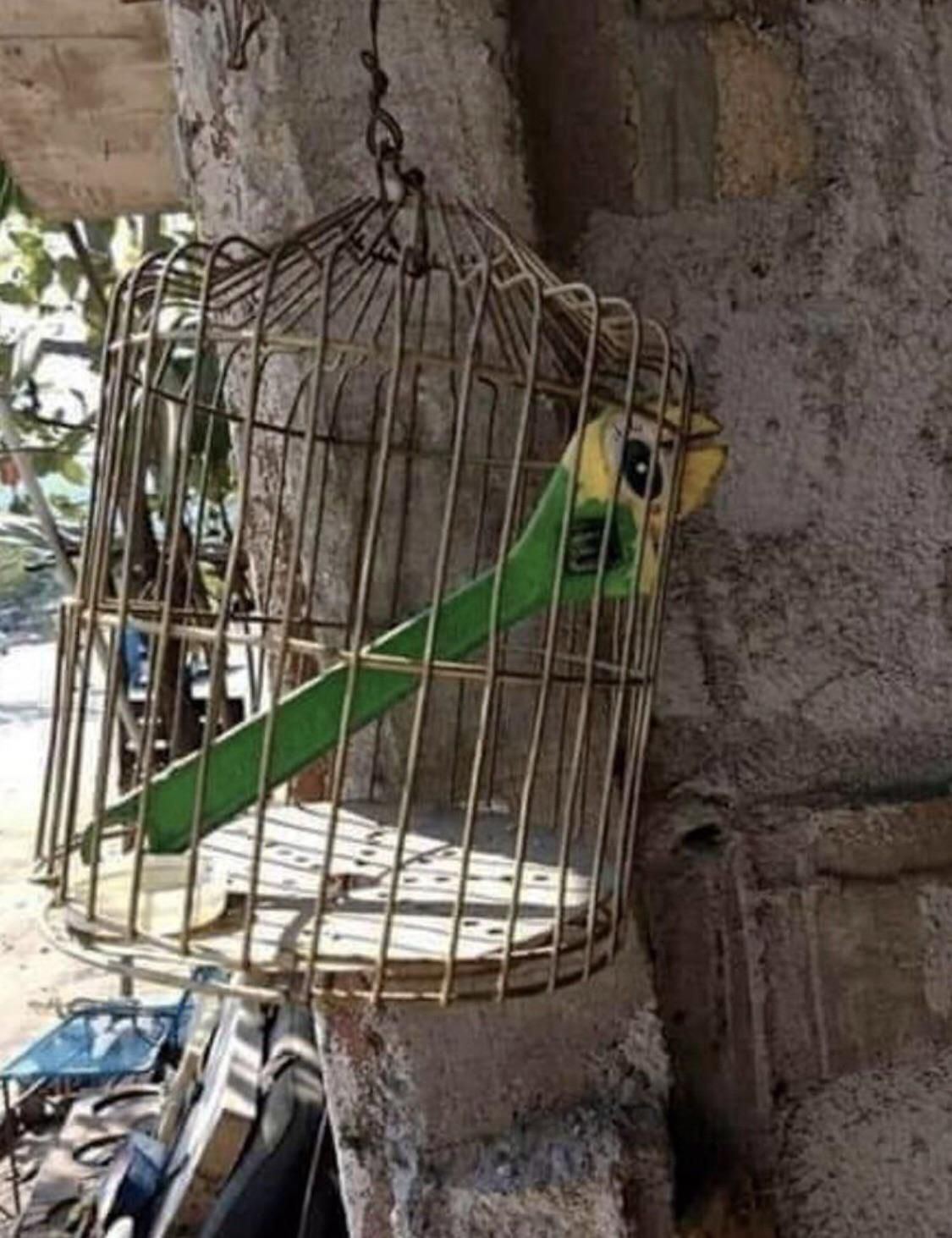 Nice parrot bro, where'd you get it?