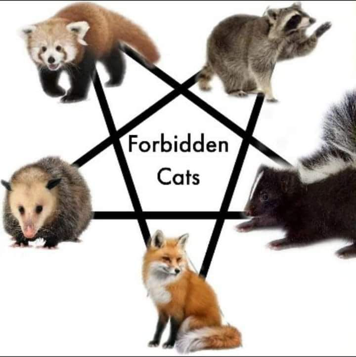 Forbidden cats.