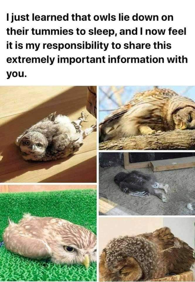 OWLS DUDE