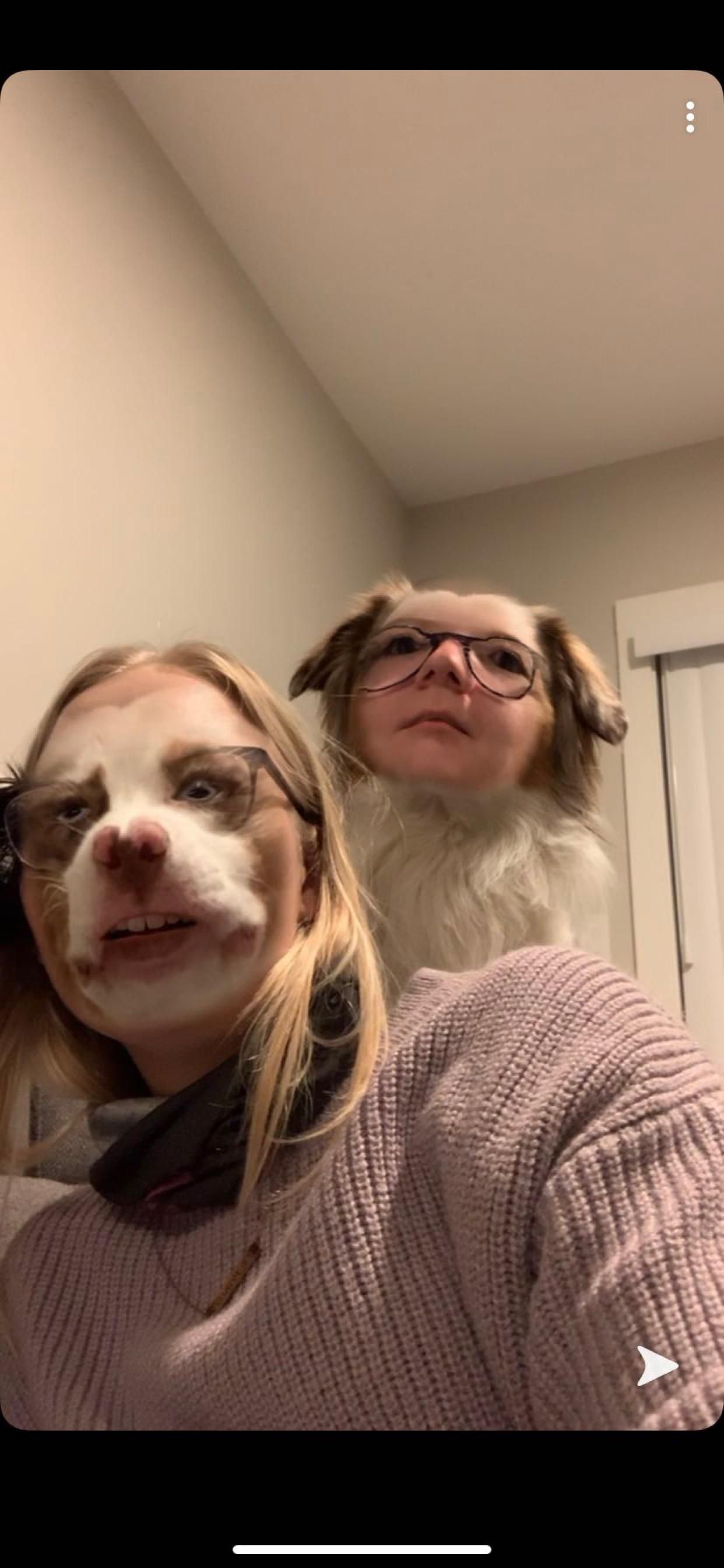 My sister had face swap open on her phone and our dog jumped behind her