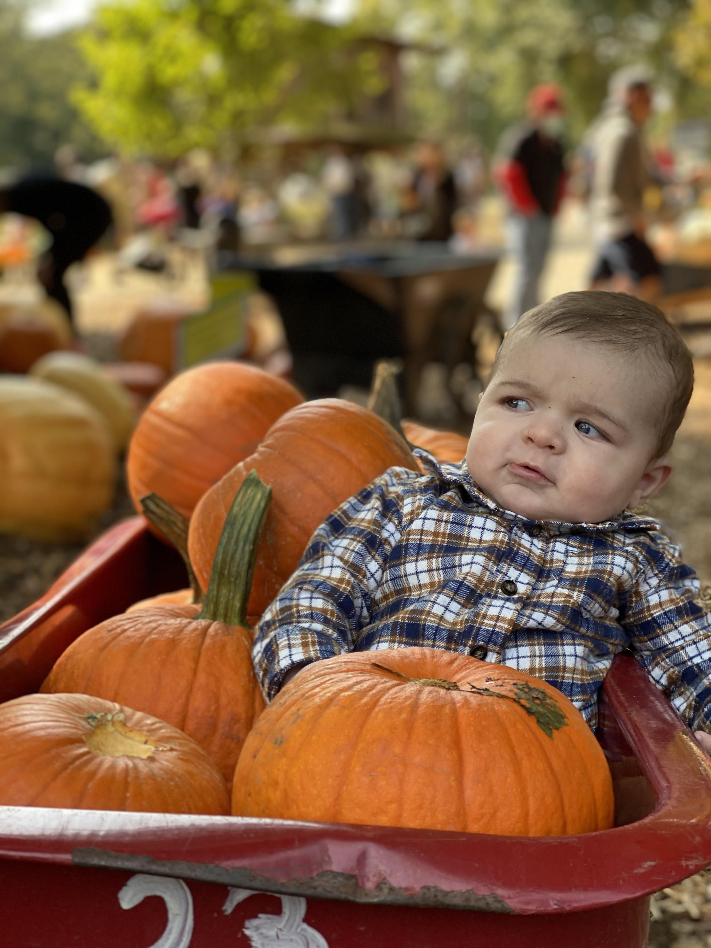 My son didn't smile once while at the pumpkin patch for the first.. he was very skeptical.