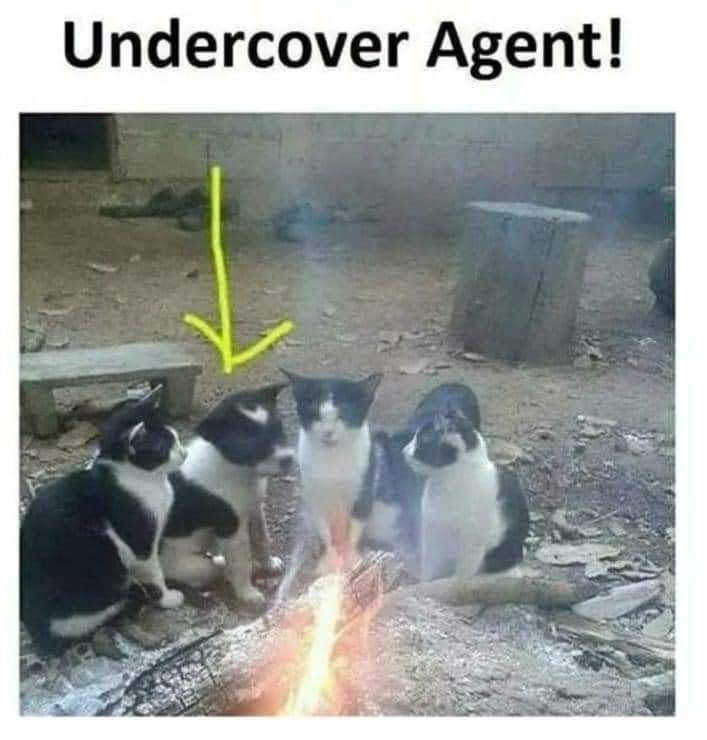 who's that under cover agent among us we need to find that