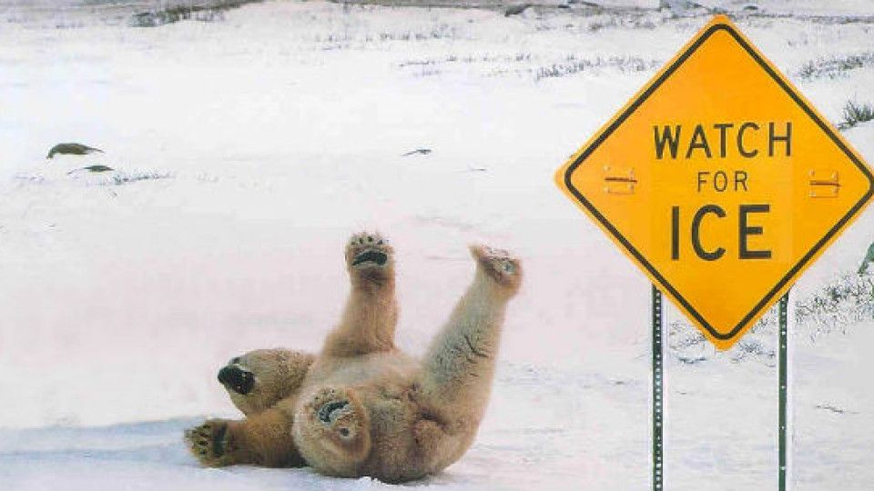 When polar bears wish they knew how to read...
