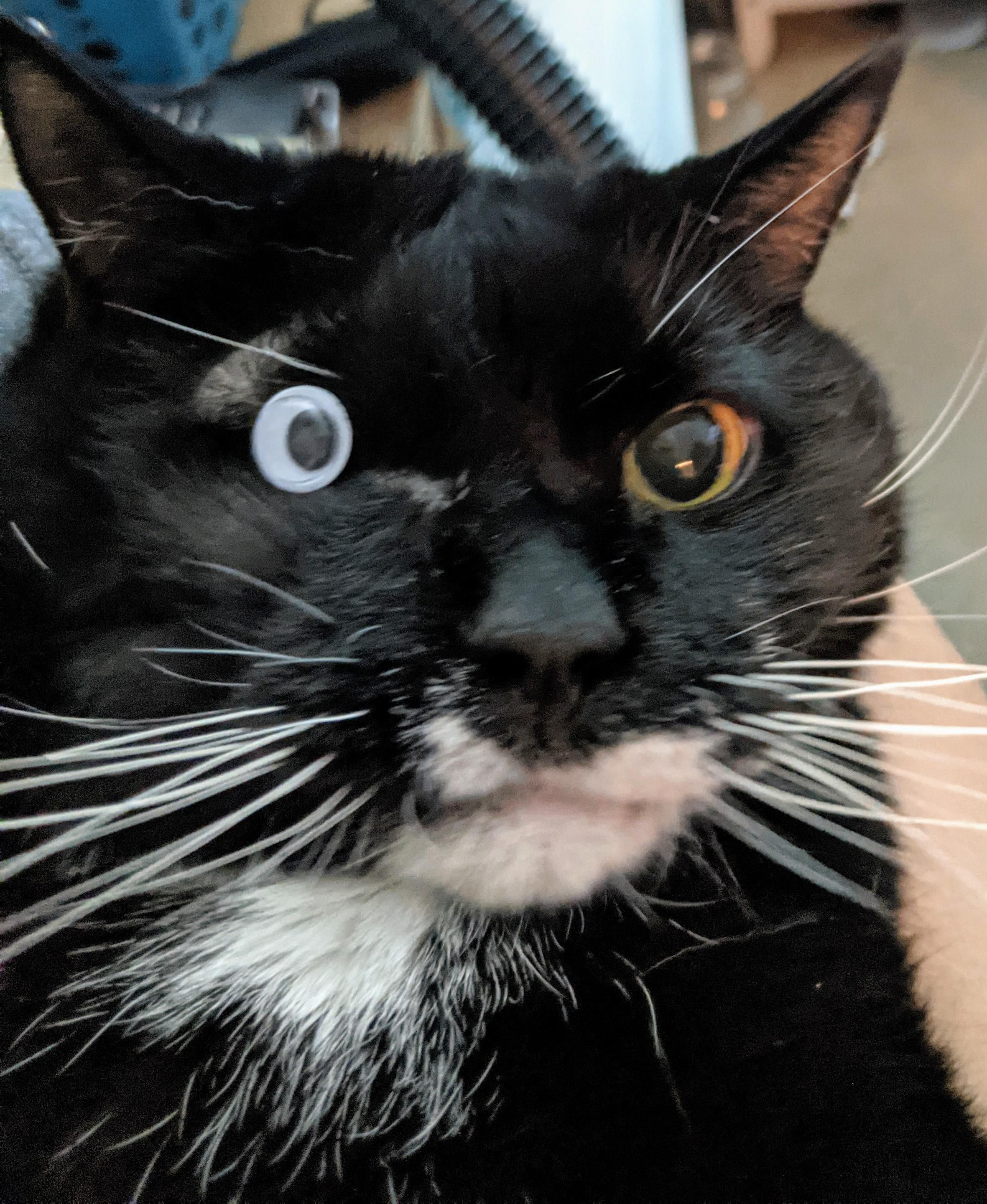 My cat had his eye surgically removed so I gave him a new one.