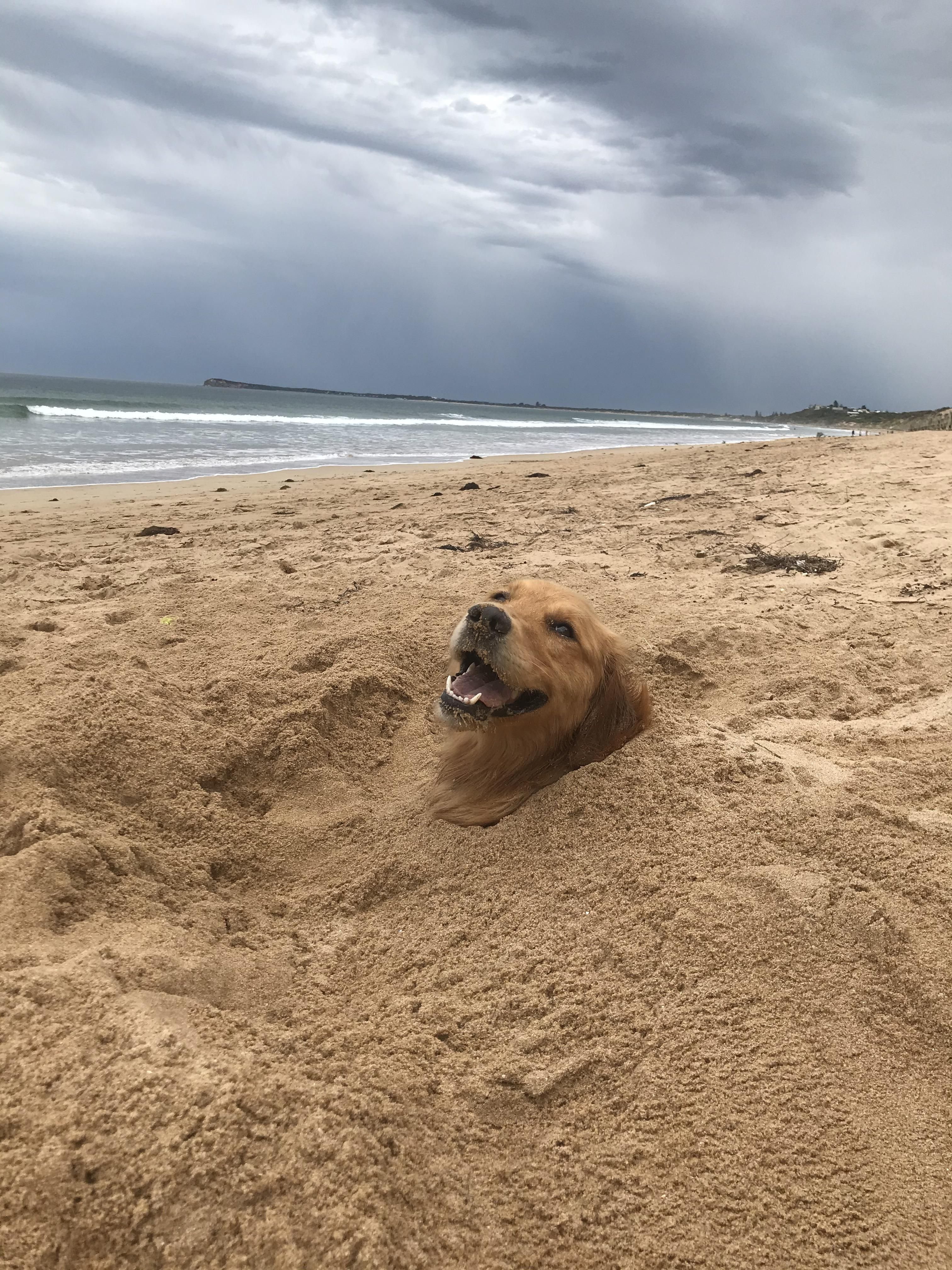 This is Indi, she loves to be buried at the beach!