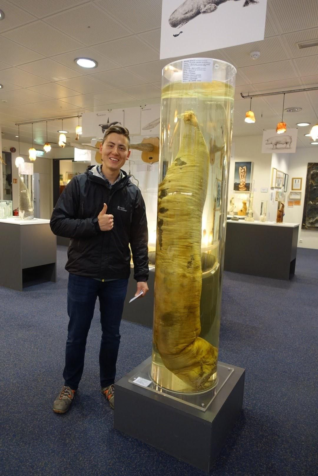 I heard you guys like pictures of people at the Icelandic Phallological Museum. Blue Whale penis for scale.