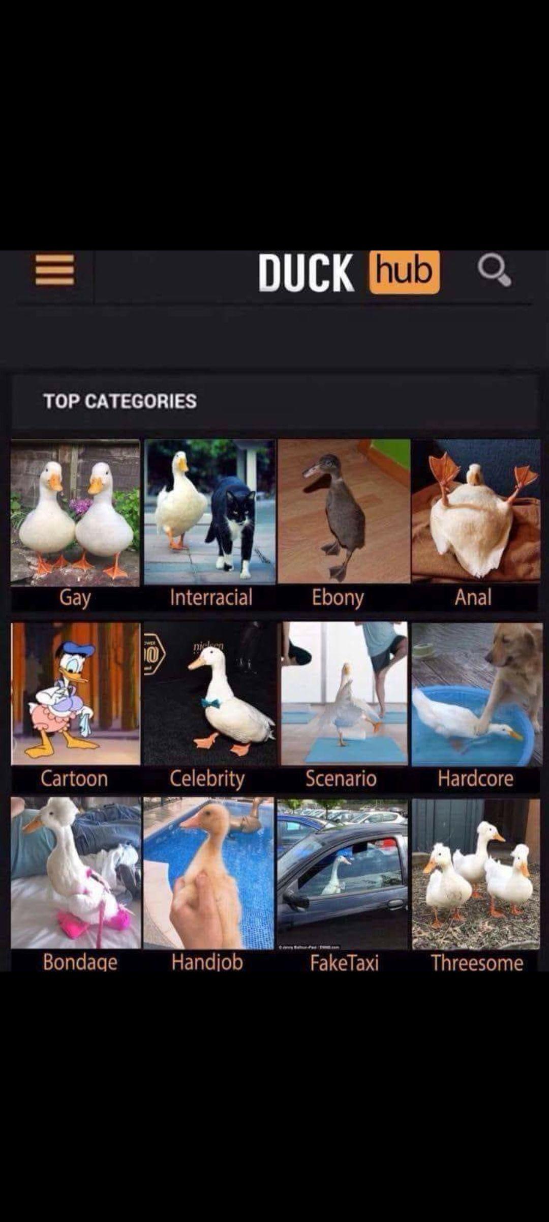 Duckhub