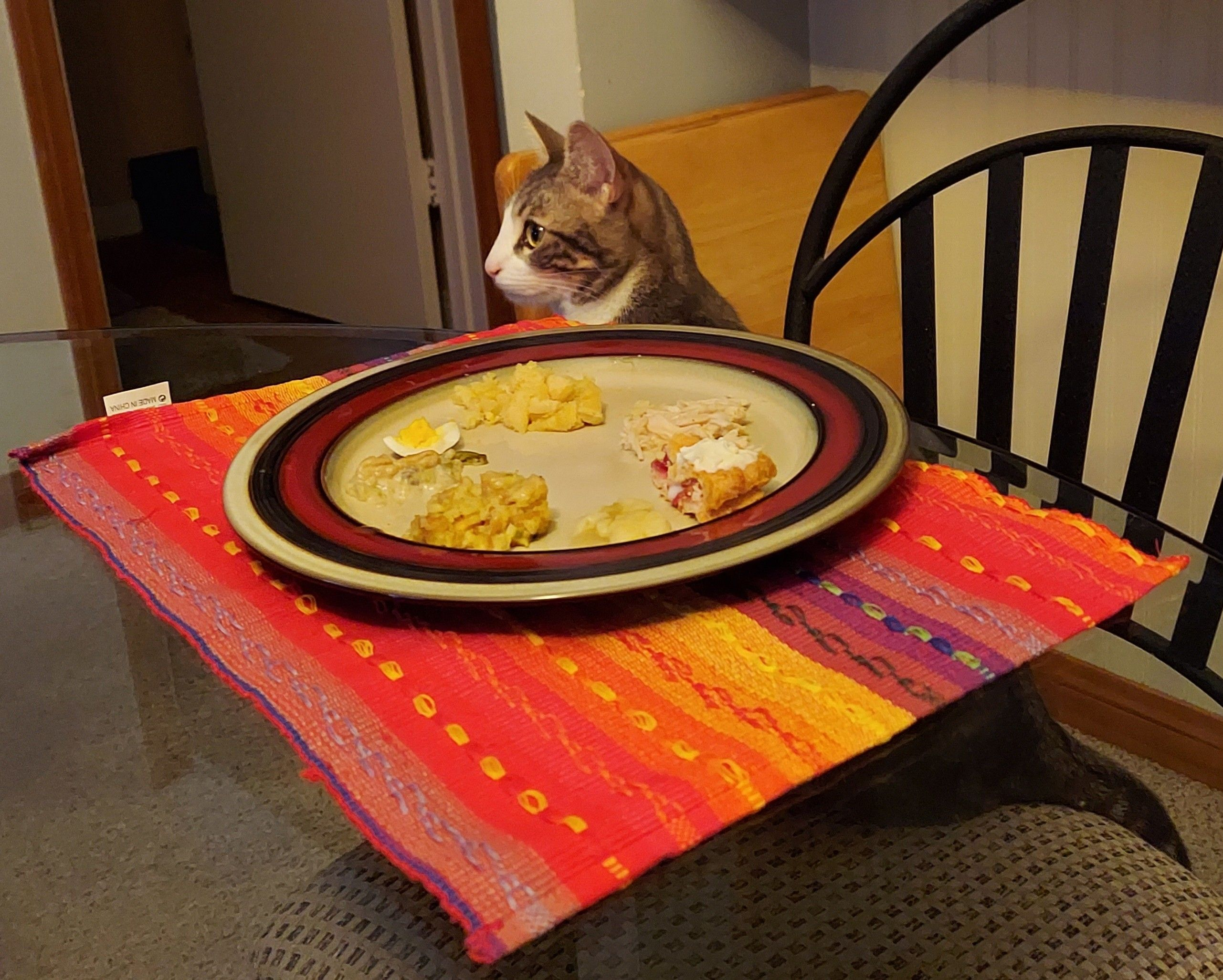 My husband made our cat a plate since it was just us this year.