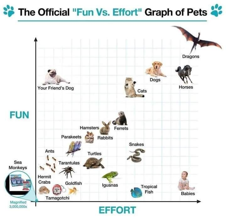 An useful guide on pet. Not mine.