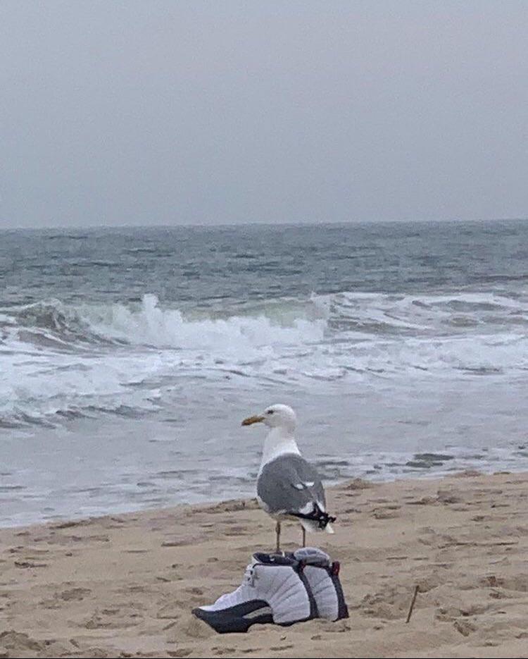 Seagull is ballin
