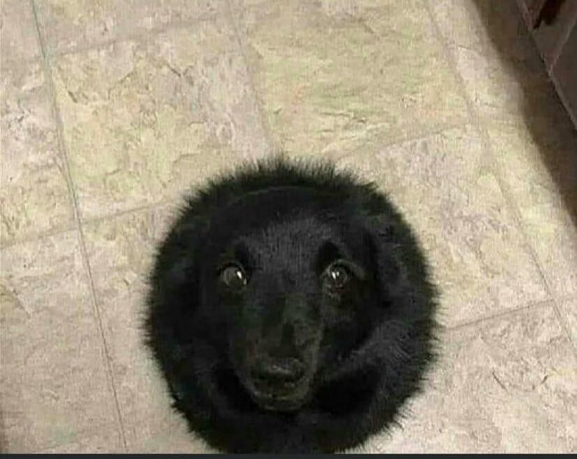 Scientists have discovered a black hole that absorbs all food falling to the floor.