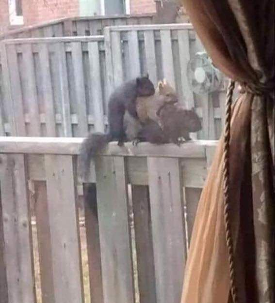 Now just what are Alvin, Simon and Theodore doing?!