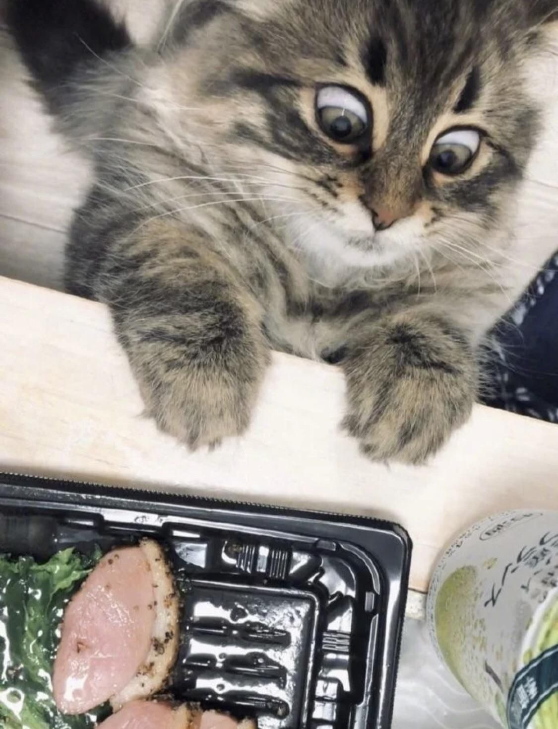The way she looks at food!