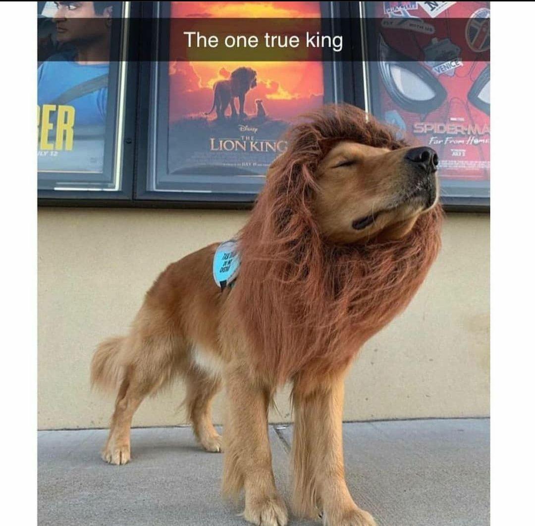 One true King!!
