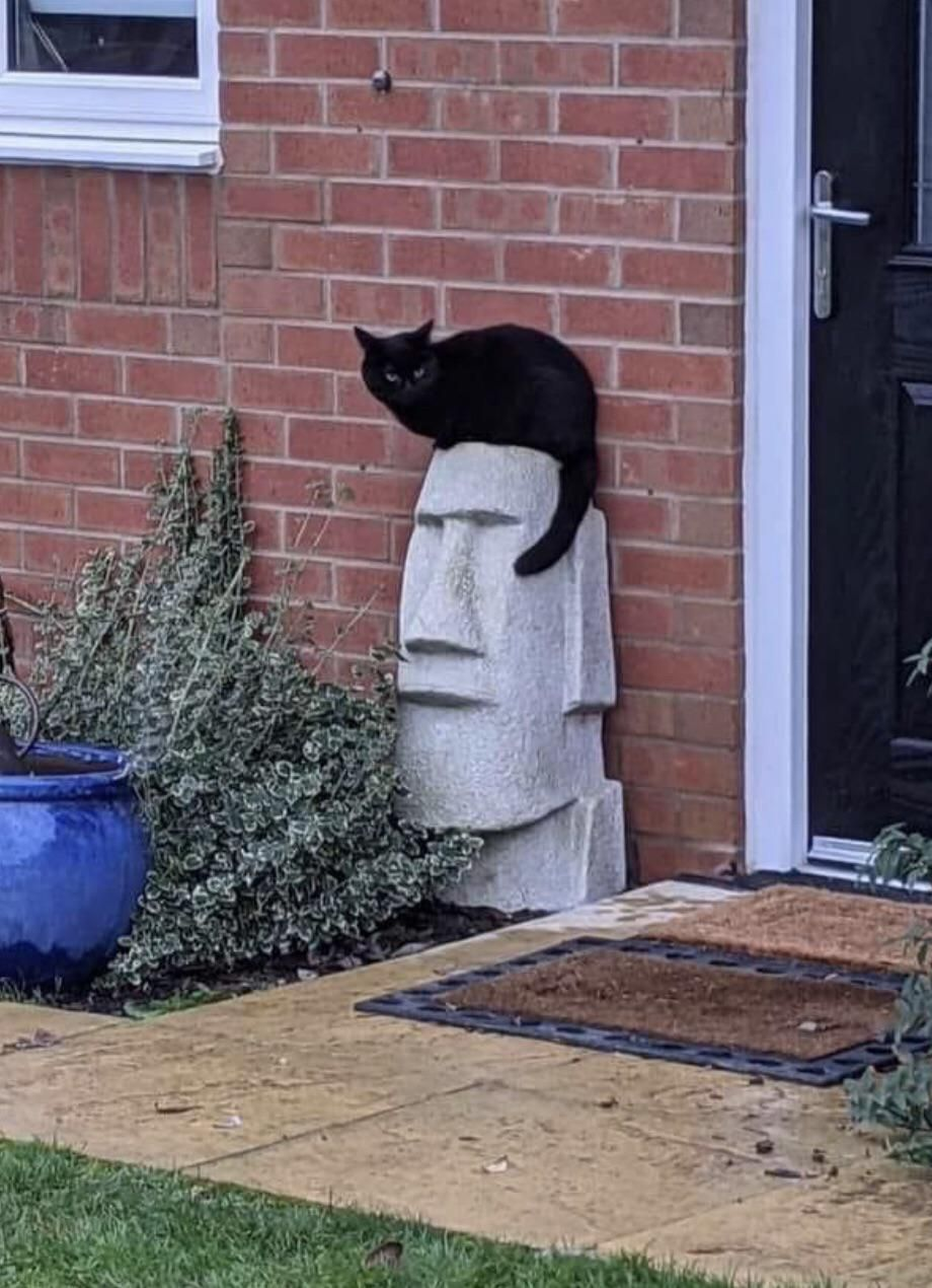 This cat makes this statue look like Elvis...